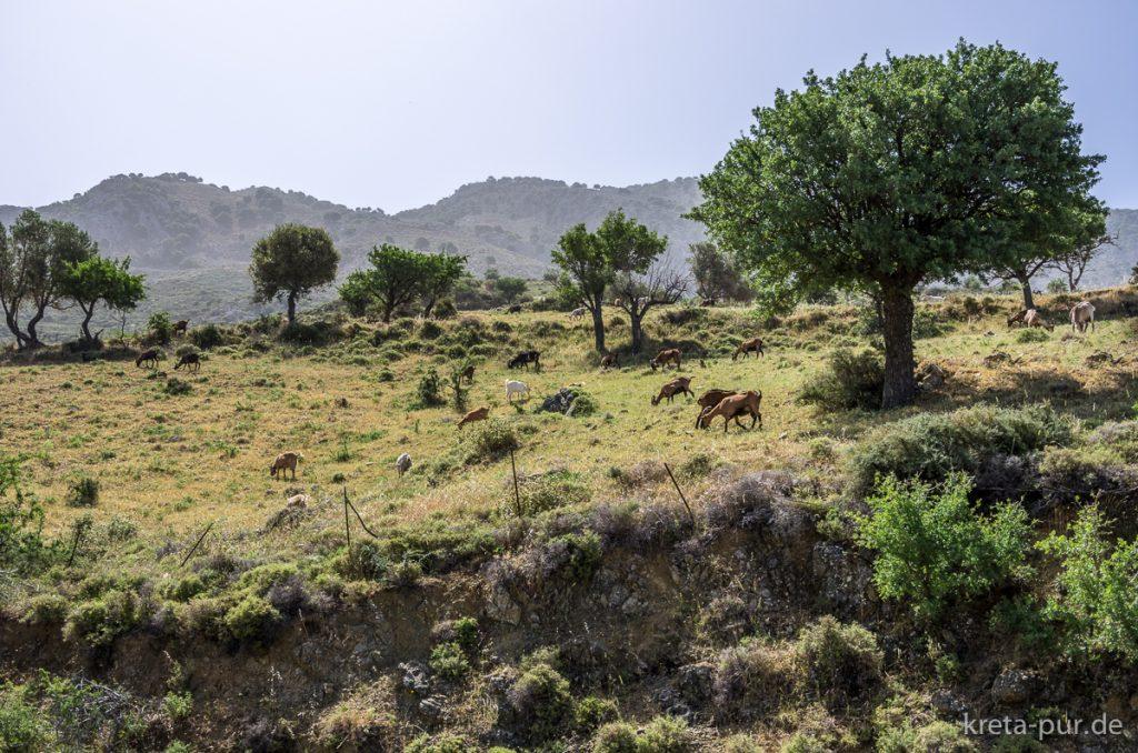 Symbolbild: Kretische Landschaft