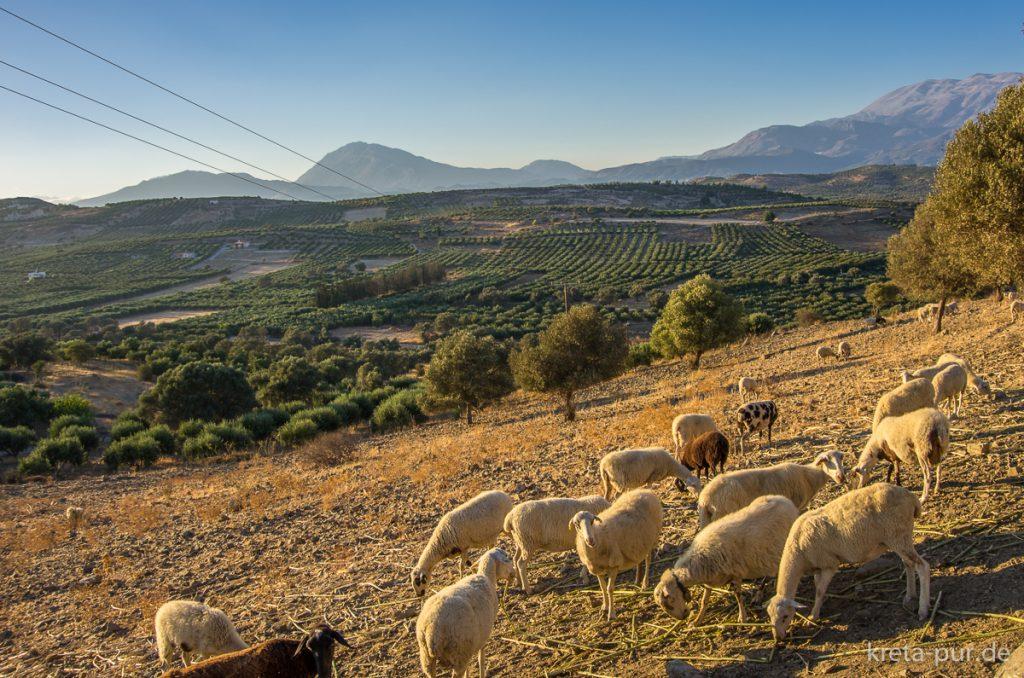 Kretische Abendstimmung, bei Sivas mit Blick auf die Messara-Ebene