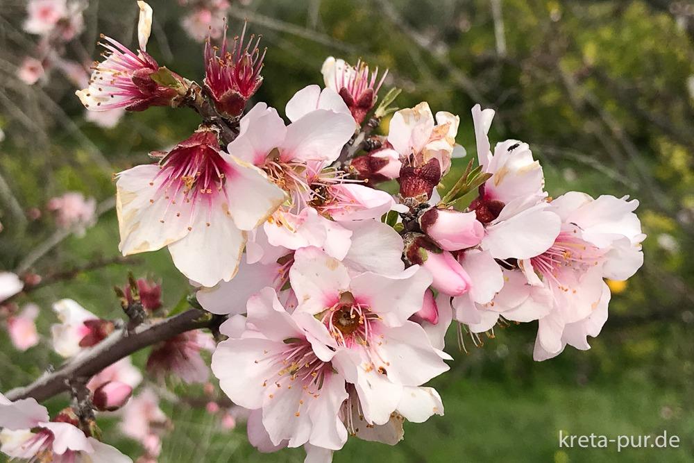 Blütenpracht im Winter auf Kreta...