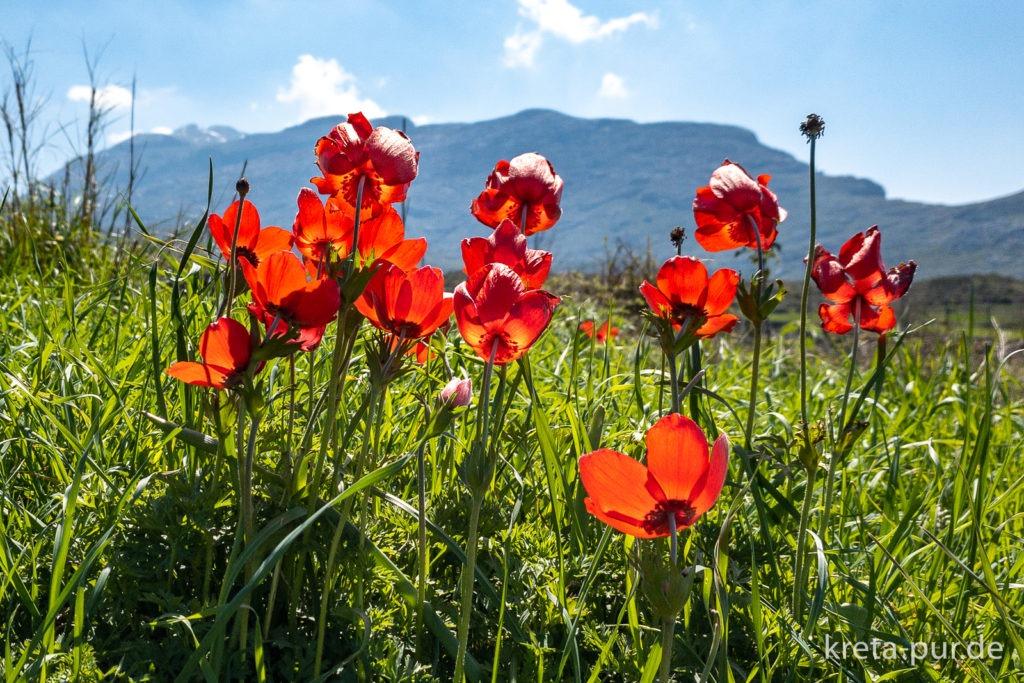 Blütenpracht auf Kreta im Frühling